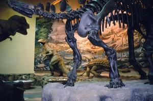 Fernbank Museum Dinosaurs